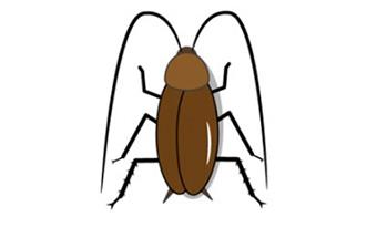ゴキブリの夢-意味-大量の-大きい-白い-金の-ゴキブリの夢診断-画像3