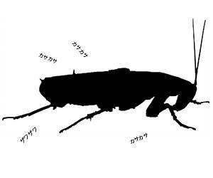 ゴキブリの卵-孵化期間-何匹生まれる--駆除方法-画像