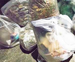 生ゴミ-捨て方-新聞紙-チラシ-紙袋-家庭ゴミ-画像