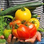プランターで家庭菜園!初心者が知っておきたい基礎知識